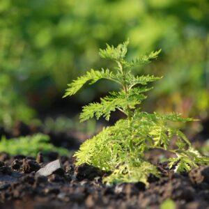 Natural Restorative Products